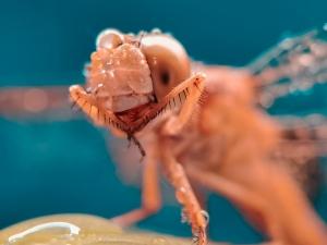 【华为P40】蜻蜓是世界上眼睛最多的昆虫,花粉随手拍-花粉俱乐部