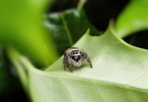 【华为P40】小蜘蛛,大不同,花粉随手拍-花粉俱乐部