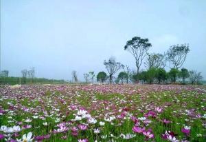 【合辑】再见了台州,我要去上海创业了……,花粉随手拍-花粉俱乐部