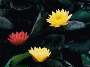 【P40Pro】一念一清净,心是莲花开,花粉随手拍-花粉俱乐部