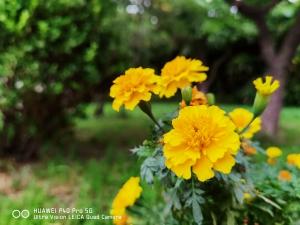 评测 | 华为P40 Pro多场景拍照测试,别说这些摄影功能你还不会?,华为P40系列-花粉俱乐部