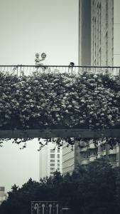 《麦子映画》~《一种色调之二》,花粉随手拍-花粉俱乐部