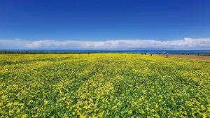大美青海湖,花粉随手拍-花粉俱乐部