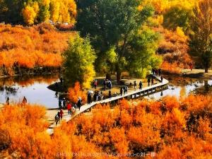 摄影 | 胡杨林,你又让秋天火了一把!居然还是华为Mate40 Pro拍的!,花粉随手拍-花粉俱乐部
