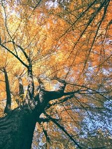 【这就是秋】,花粉随手拍-花粉俱乐部