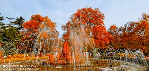秋天红叶,花粉随手拍-花粉俱乐部