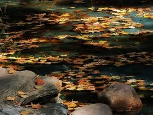 落叶中的水与水中的落叶,花粉随手拍-花粉俱乐部