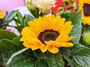 花团锦簇,花粉漫谈-花粉俱乐部