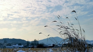 雪后天晴,再来一波乡下雪景图。,花粉随手拍-花粉俱乐部
