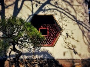 中国四大明园—【留园冬日篇】,花粉随手拍-花粉俱乐部