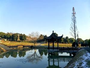 """【家乡美景】冬日""""九一六茶园"""",中国最美茶园就是美!,花粉随手拍-花粉俱乐部"""