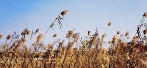 金海湿地公园,花粉随手拍-花粉俱乐部
