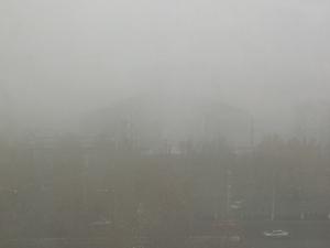 大雾,花粉随手拍-花粉俱乐部
