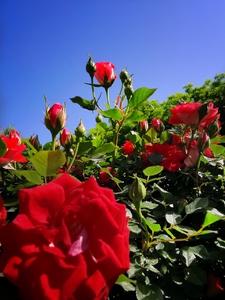 【HUAWEI P30 pro随拍】分享夏日的花,花粉随手拍-花粉俱乐部