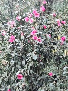 花开冬日,花粉随手拍-花粉俱乐部