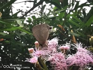 双头生物,花粉随手拍-花粉俱乐部