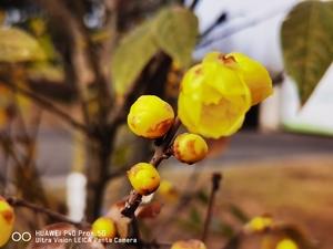 数九寒天里的微笑,花粉随手拍-花粉俱乐部