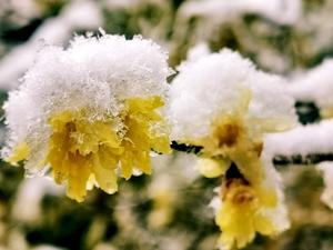雪后的清晨小景,花粉随手拍-花粉俱乐部