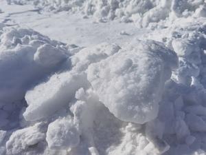 冬雪,花粉随手拍-花粉俱乐部