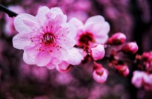 等待;春,花粉随手拍-花粉俱乐部
