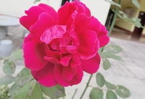 幸福像花儿一样绽放,花粉随手拍-花粉俱乐部
