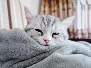 20210103小猫日常,花粉随手拍-花粉俱乐部