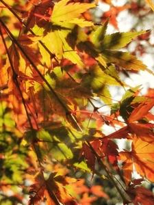 《红叶壮冬景》,花粉随手拍-花粉俱乐部