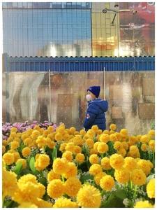街拍北京,随手拍-花粉俱乐部