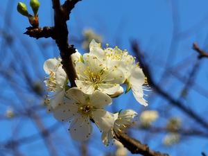 分享,华为P40系列-花粉俱乐部
