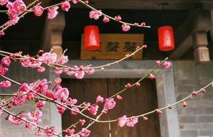 红梅绽放季,花粉随手拍-花粉俱乐部