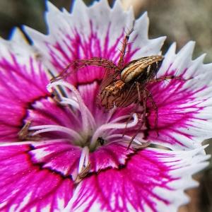 昆虫记~蜘蛛,随手拍-花粉俱乐部