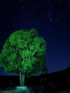 乡村古树下的星空,随手拍-花粉俱乐部