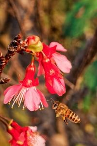 春天里来百花香,蝶飞蜂舞伴花开,随手拍-花粉俱乐部