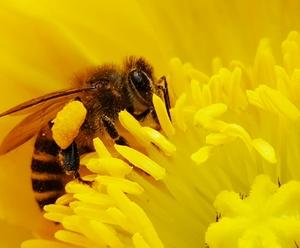 【萌在花蕊中】,随手拍-花粉俱乐部