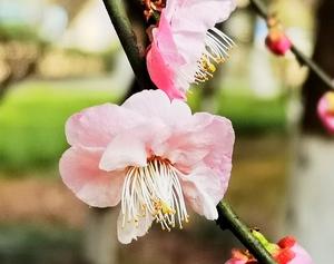 花迎春,随手拍-花粉俱乐部