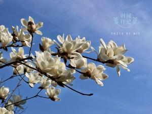 春光印记,花粉随手拍-花粉俱乐部