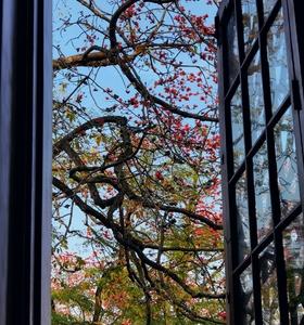 窗外,随手拍-花粉俱乐部