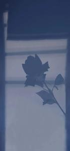 KWGT插件/简约小插件,创作-花粉俱乐部