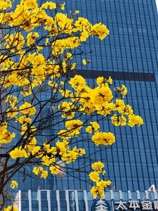 【P40pro随手拍】花开满城,绿城变花城,花粉随手拍-花粉俱乐部
