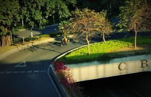 广州街景,随手拍-花粉俱乐部