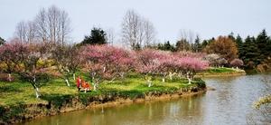 上海海湾国家森林公园(一),随手拍-花粉俱乐部