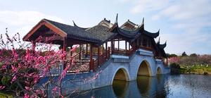 上海海湾国家森林公园(一),花粉随手拍-花粉俱乐部