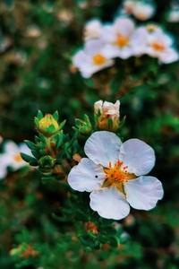 春暖花开,花粉随手拍-花粉俱乐部