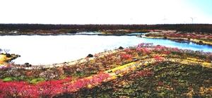 上海海湾国家森林公园(二),随手拍-花粉俱乐部