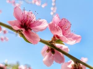 春暖花开,随手拍-花粉俱乐部