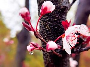 雨后春花,随手拍-花粉俱乐部