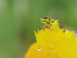 今日 花粉