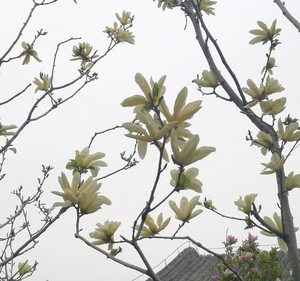 【mate30pro】三月人间春 记得吃水果,花粉随手拍-花粉俱乐部