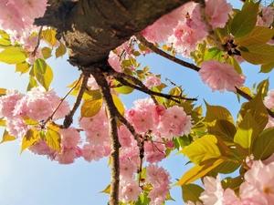 三月春光,花粉随手拍-花粉俱乐部