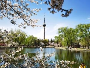 樱花丛中的中央电视塔,花粉随手拍-花粉俱乐部
